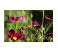 Dragonfly with fuschia flowers Art Print