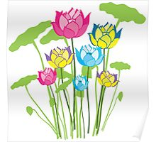 Colorful water lily flowers Poster
