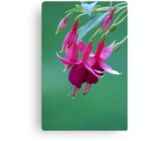 Pink flowers on green background Canvas Print