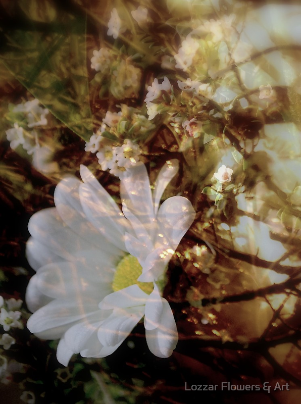 Restful Place by Lozzar Flowers & Art