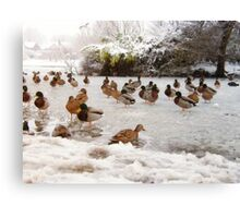 Ducks on a Frozen Lake Canvas Print
