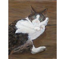 Concern - cat portrait Photographic Print