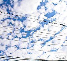 Tune by TophuPhoto