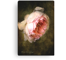 Summer's last rose Canvas Print