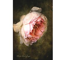 Summer's last rose Photographic Print