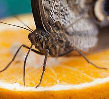 butterffly on fruitbutterffly on fruit by spetenfia
