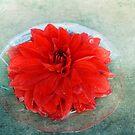 Red Dahlia Offering by Lynn Starner