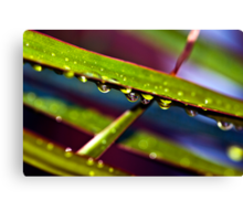 Green Drops Canvas Print