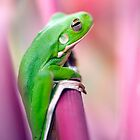 Froggie in the pink by Jenny Dean