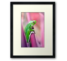 Froggie in the pink Framed Print