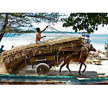 Cidomo horse carts of the Gili Islands.  Photographic Print