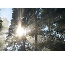 """Shine"", Yarra Valley, Victoria, Australia Photographic Print"
