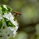 Busy Bees by anneisabella