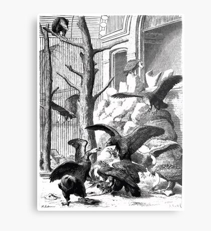 Heinrich Leutemann Die Gartenlaube 1864 b 165 Metal Print