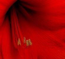 Red by KeepsakesPhotography Michael Rowley