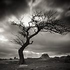Dog Rock Tree by Christine  Wilson Photography