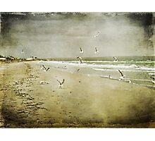 Born Free ~ Photographic Print