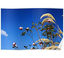 Roses & Grass Poster