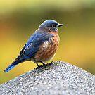 Yes I Am A Very Pretty Bird!! by barnsis