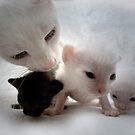 Kittens by Regenia Brabham
