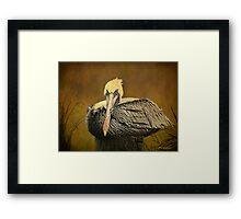 Brown Pelican Relaxing - Textures Framed Print