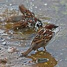 Is it bath time again? by Konstantinos Arvanitopoulos