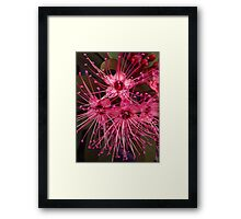 elegant pink flower Framed Print