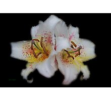 Textured White Lilies Photographic Print