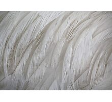 Emu Feathers Photographic Print