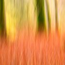 Fire in the woods by M.S. Photography/Art