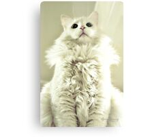 Spoiled Bratty Kitty Metal Print