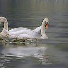 Mute Swan Couple by KatMagic Photography