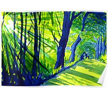Sunlight Through the Trees, Derbyshire Poster