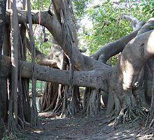 Trunk of a tree II - Down by the Riverside by Bernhard Matejka