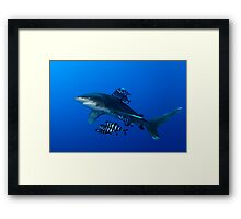 The Curious Framed Print
