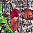 Florida Fall by Noble Upchurch