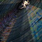 Charlotte & Web In The Evening Light by Heather Friedman