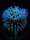 Blue Neutron Star by Atılım GÜLŞEN