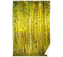 Autumn Aspens Vertical Image Poster