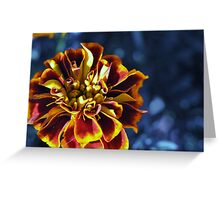 Another Marigold Greeting Card
