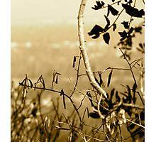 Topiary Gorge  Photographic Print