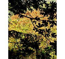 Harvest Gloom Frond  Photographic Print