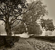 Dawn Solitude by Kabeer Lal