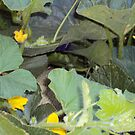 Blossoms On A Squash Plant by Bearie23