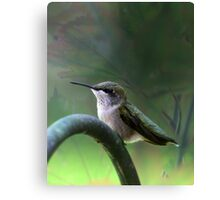 Hummingbird Dreams Canvas Print
