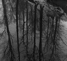 reflection by badbrooksie