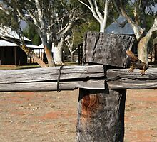 Telegraph Station, Alice Springs, NT by Kerrie Gerlach