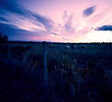 Fading light over pasture near Rangiora by Elaine Stevenson