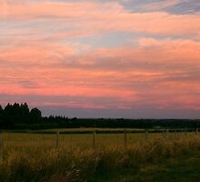 Sunset from Marshmans Road, Rangiora by Elaine Stevenson