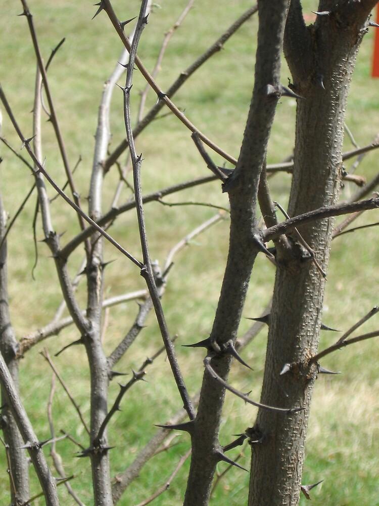 Thorns by BagLady